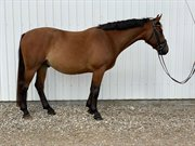 Horse for sale - COLOMBUS