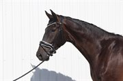 Horse for sale - SIR DONNERLYNG