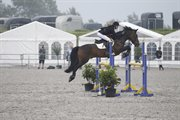 Horse for sale - Østerlunds Comet
