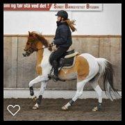 Horse for sale - JUNIOR DE TRENO
