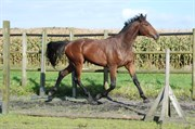 Horse for sale - Crosby