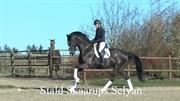 Horse for sale - STALD SKAARUPS SELYAN