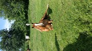 Horse for sale - Lilly