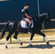 Horse for sale - KIRSEBÆRGÅRDENS EXSTATIC