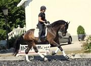 Horse for sale - BAUNEHØJENS SAVOY