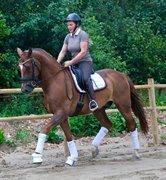 Horse for sale - RINGER'S BELLO MONELLO