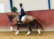 Hest til salg - DORTHEASMINDES VANESSA