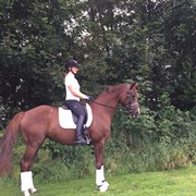 Horse for sale - FLO
