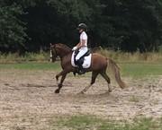 Hest til salg - GRIBSVADS GENERAL LEE JO