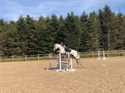 Horse for sale - MEADOW MIST
