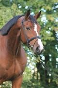 Horse for sale - KASTKÆRS LA VIDA