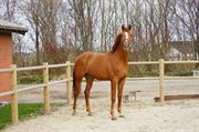 Horse for sale - Zelandro M