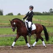 Horse for sale - LUNDEMARKSGÅRDS HANNIBAL