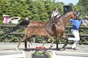Horse for sale - MAXIMILLIAN