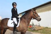 Hest til salg - BLÅBÆRGÅRDENS QUARTERBACK