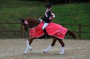 Hest til salg - GEE GEE 2