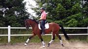 Horse for sale - Ferrari Steffenhøj