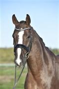 Horse for sale - FAITE D'ESPOIR