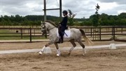 Horse for sale - MIDTJYDENS CASSIOPEIA