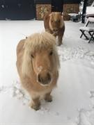 Horse for sale -  Dressage Schoolmaster Wanted
