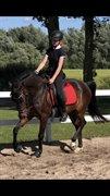 Horse for sale - KULI'S BAILANDO