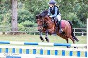 Horse for sale - AMIGO CITRUS