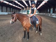Horse for sale - MIRAIN TAKE THAT