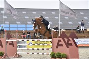 Horse for sale - GIGI ALFARVAD Z