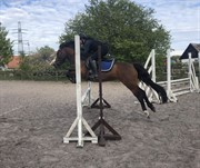 Horse for sale - TOFTELUNDS SELINA