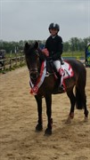 Horse for sale - ORION NOIR