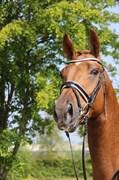 Horse for sale - HEINSGÅRDENS RED ROSE
