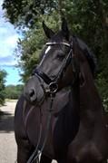 Horse for sale - SKOVGÅRD'S LEGINESSA