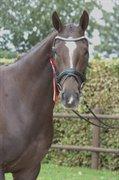 Horse for sale - GABBY V
