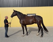 Horse for sale - CHARMING SILAS