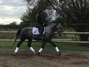 Horse for sale - Fiona AJ