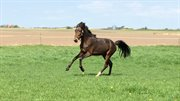 Horse for sale - DØLBYS ZAVANNAH
