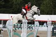 Hest til salg - CORTUS