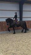 Horse for sale - Ids Fan'e Fausbjerggaard