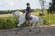 Hest til salg - FERNANDO