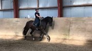 Horse for sale - BØGEVANGS LADY BALINA