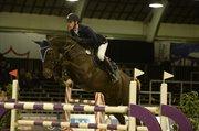 Horse for sale - AMILLEE RAVNES-HAVE