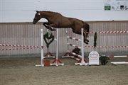 Horse for sale - VOLSTRUPS CAISA