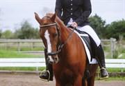 Horse for sale - KULI'S ANDROMEDA