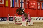 Horse for sale - WANDA II