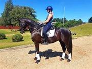 Horse for sale - BRUUNHOLMS DROGBA
