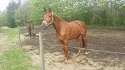 Horse for sale - Nygaard`s Watch Me