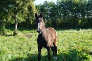 Horse for sale - DIGGITY IQ