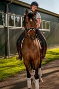 Hest til salg - ZAFIA