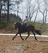 Horse for sale - CENTINA