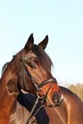 Hest til salg - T-SHOP FIRFOD